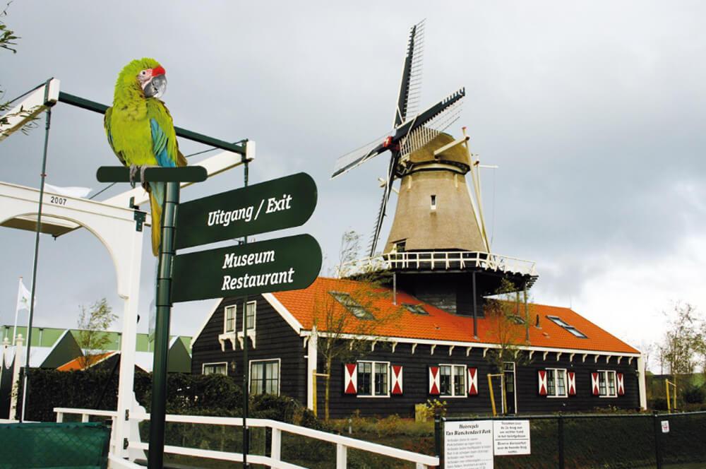 de molen met papagaai