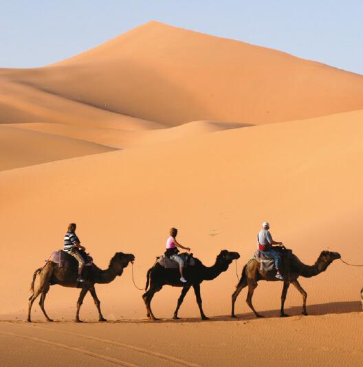 dieren-azie-kameel-fact-02