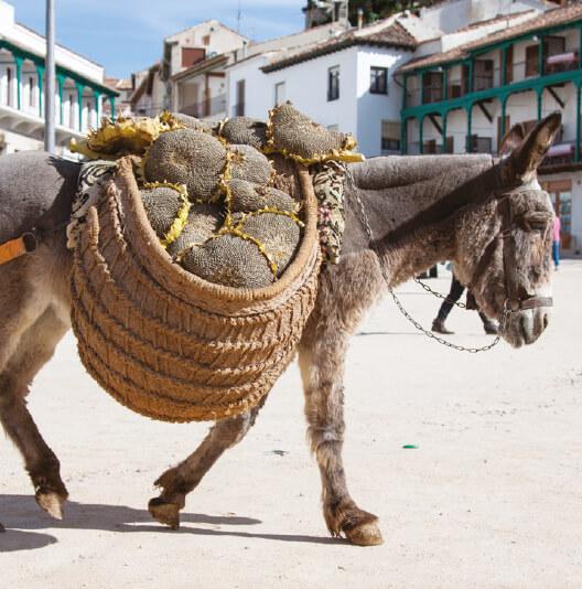 dieren-eurazie-ezel-fact-02