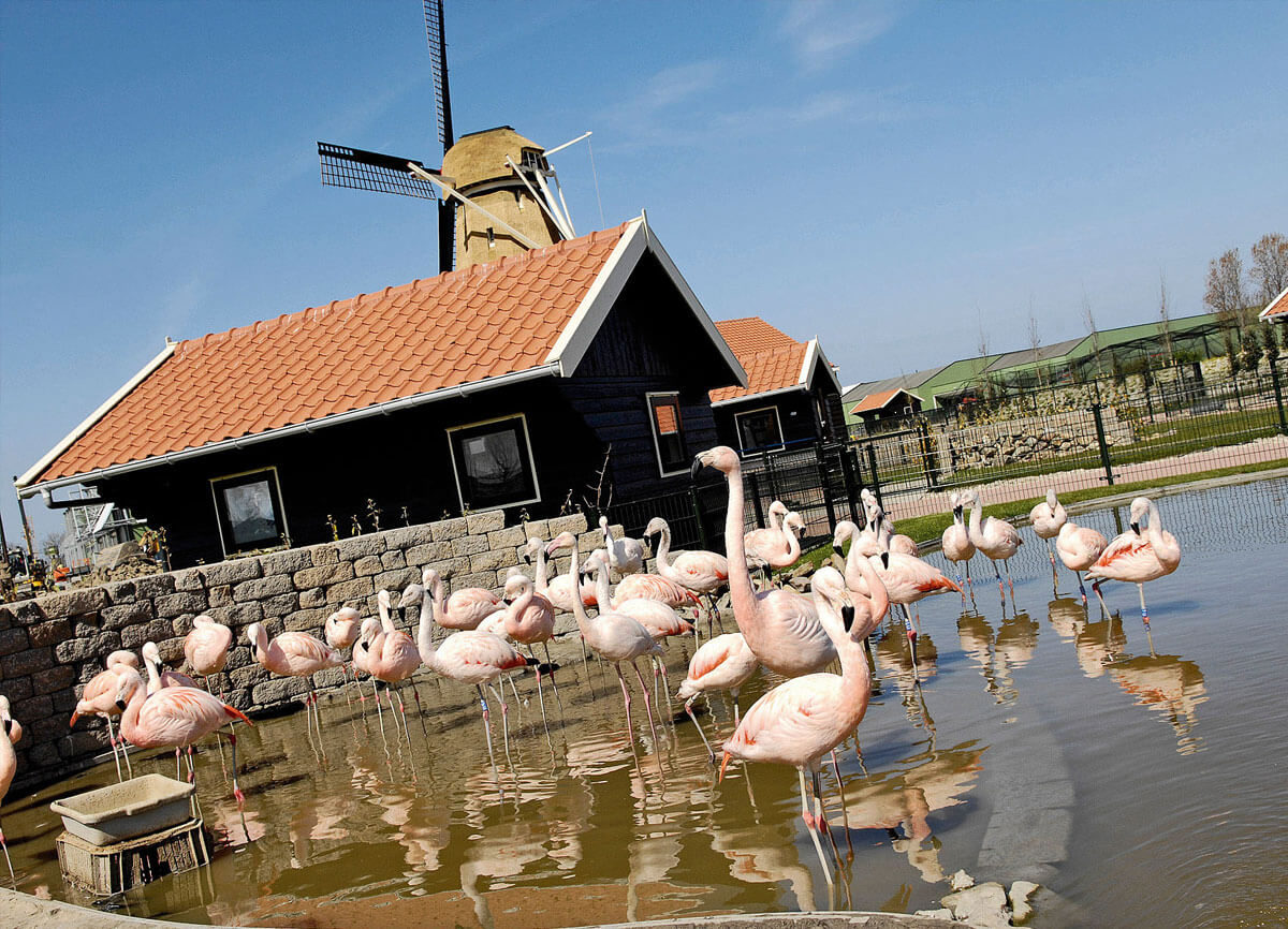 Holle bolle boom - flamingo